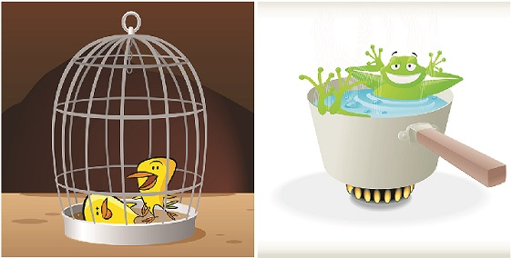 The Frog or the Canary: Which One Rules at Your Workplace?