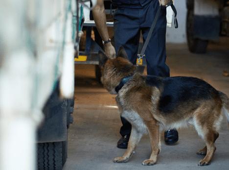 More Drug Raids at Western Australian Mine Sites