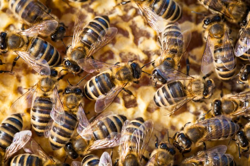 Worker stung by swarm of bees at WA mine