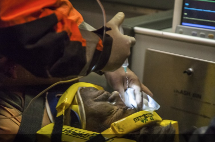 a survivor from the chilean copper mine is treated for injuries