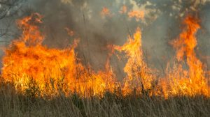 Higginsville mine site bushfire